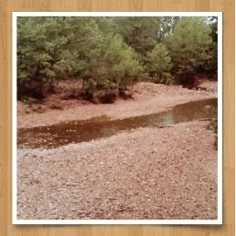 dry-creek-maries-co-1.jpg